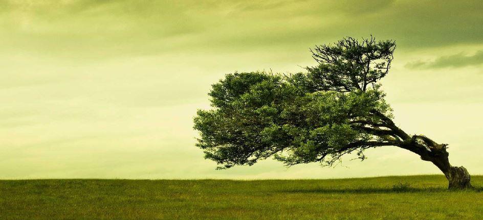 La Resilienza nel Project Management
